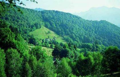 CRISTINA: MIGLIORARE IL COORDINAMENTO NEGLI INTERVENTI DELLE SQUADRE FORESTALI