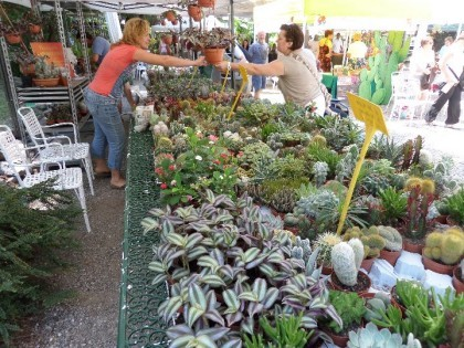 Piante rare e succulente con cactus folies appuntamento for Piante rare