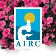 Oggi in distribuzione l azalea della ricerca di airc for Azalea della ricerca 2017